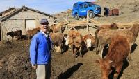 Hayvanlarını başı boş bıraktığı için para cezası kesildi