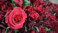 Başkentte 14 Şubatta 300 bin çiçek satılacağı tahmin ediliyor