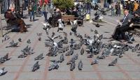 Orta Karadenizde bahar havası yaşanacak