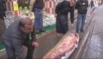 2,5 metrelik yayın balığı yakalandı