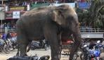 Hindistanda Fil Saldırısı