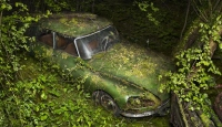 Ormana Park Edilmiş Otomobiller