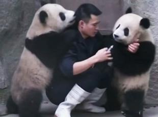 İlaç içmek istemeyen pandalar