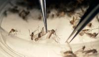 Latin Amerikada Zika ile mücadele