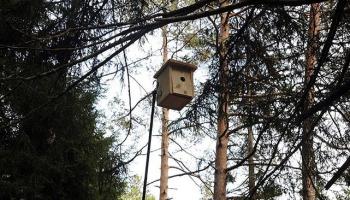 Ormanlara kuşlar inçi binlerce yuva asıldı,