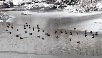 Sarýkamýþta Ördek Gölü buz tuttu