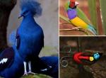 Dünyanın en güzel 25 kuşu