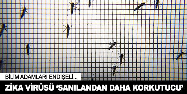 Zika'nýn etkisi sanýlandan fazla olabilir
