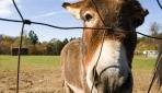 Eşek Sütü İçin Büyük Yatırım