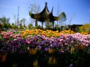 EXPO'da japonya ve Çin, büyüleyici bahçeleriyle