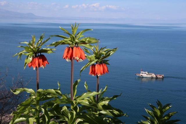 Van Gölü koylarında ilkbaharın büyüleyen güzelliği