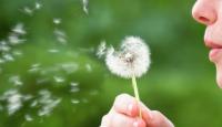 Polene alerjisi olanlar dikkat