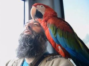 Papağan Allahı zikrediyor