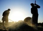 Pakistanda buğday hasadı