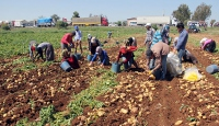 Patates üretciyi de tüketciyi de mağdur ediyor