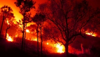 2 bin hektarlık orman küle döndü