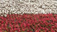 İzmirli çiçek üreticileri talebe yetişemiyor