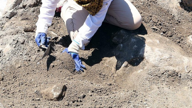 230 milyon yıllık sürüngen ayak izi fosili bulundu