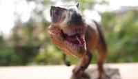 Dünyanın en küçük dinozor ayak izleri bulundu