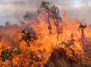 Kanadada orman yangını