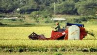 8 bin yıl öncesine dayanan pirinç tarlası bulundu