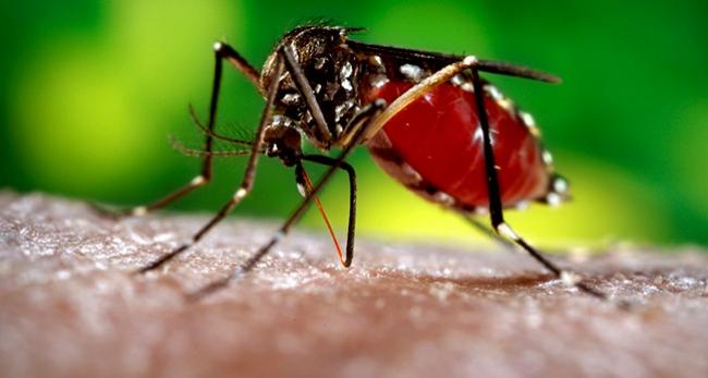 Zika virüsü kansere umut oldu