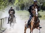 """Atlar """"özel"""" görevler için hazırlanıyor"""