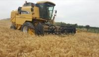 Buğday rekoltesinde düşüş bekleniyor