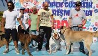 En güzel köpek yarışması
