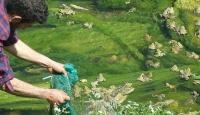 Kaçak kurbağa toplayanlara 163 bin lira ceza