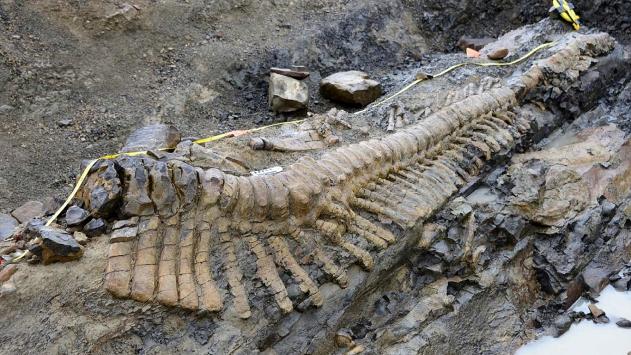 Dinozorların neslinin tükenmesiyle ilgili yeni iddia