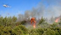 Edirnede orman yangını