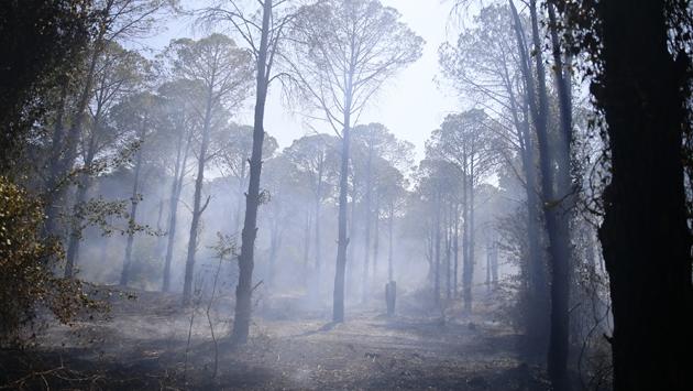 Antalya Gazipaşada orman yangını