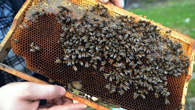 'Sokmayan arı'nın taleplerine yetişilemiyor