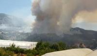 Antalyanın Kumluca ilçesinde orman yangını
