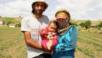 Suriyeli avukat ırgatlıkla geçimini sağlıyor