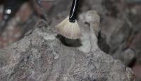Meksikada 14 bin yıllık mamut fosili bulundu