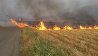 Orman yangınında 10 hektar alan zarar gördü