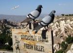 Turizm ve tarıma hizmet için kanat çırpıyorlar