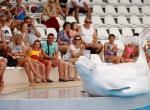 Yunusların gösterisine turist ilgisi