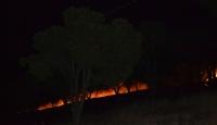 Ayvalıkta orman yangını