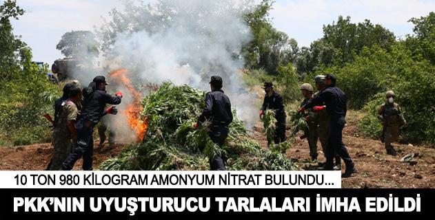 PKKnın kenevir tarlaları imha edildi