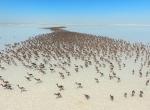 Tuz Gölünde flamingo kreşi