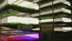 Gelecek nesiller için dikey tarım