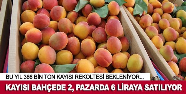Kayısı bahçede 2, pazarda 6 lira