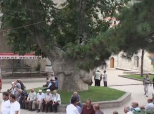 450 yıldır gölgeleri cemaati serinletiyor