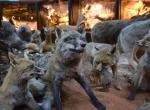 Hayvanlar alemi müzede tanıtılıyor