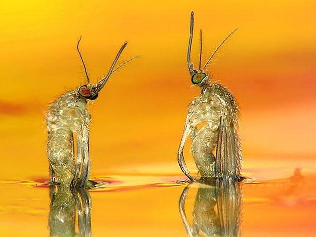 Bir Sivrisineğin Doğum Anı