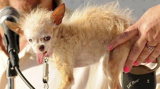 Dünyanın En Çirkin Köpeği Öldü