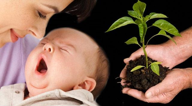 Her Bebeğin Dikili Ağacı Olacak